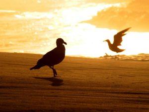FineArt – Amanhecer Dourado – aves